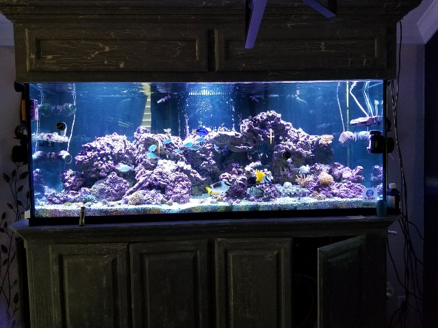 210 Gal Planet Aquarium Tank With Custom Stand And Canopy