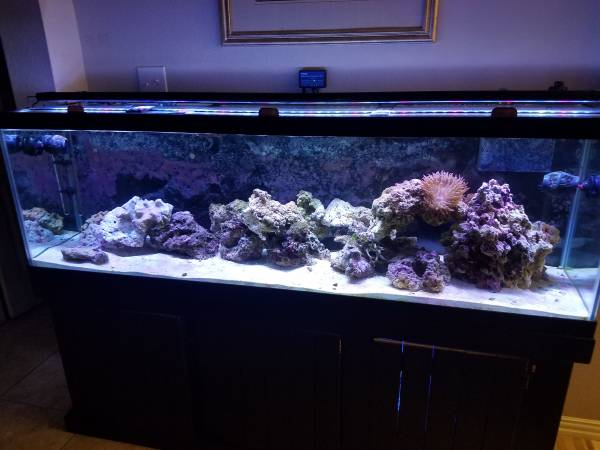 FS - 125 Gallon Saltwater Tank Full Setup and lots of